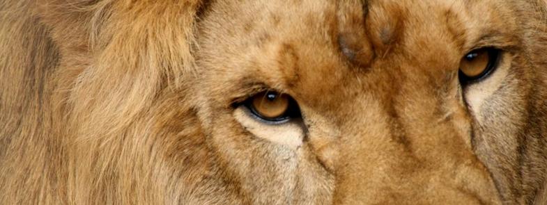 Vier Voeters Koning van de Jungle Blog Thumbnail 785x295 | Rowena Goes Ape