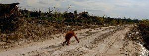 Orangutan Crowdfunding Thumbnail 785x295 | Rowena Goes Ape
