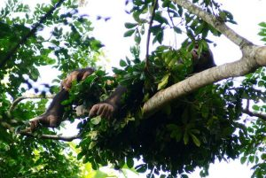 Slapen in een Chimpansee nest   Rowena Goes Ape (2) Kathelijne Koops