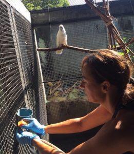 Vrijheid voor Kaketoes   Rowena Goes Ape 2