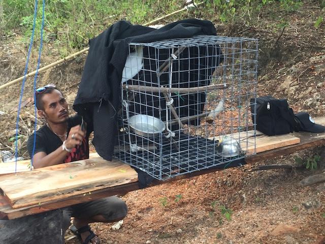 Vrijheid voor Kaketoes | Rowena Goes Ape 4