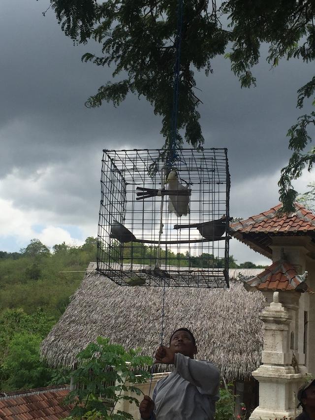 Vrijheid voor Kaketoes | Rowena Goes Ape 5