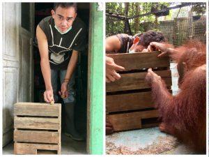 Orang-Oetans in Borneo 2 Verrijking   Rowena Goes Ape (1)