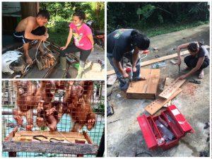 Orang-Oetans in Borneo 2 Verrijking   Rowena Goes Ape (4)