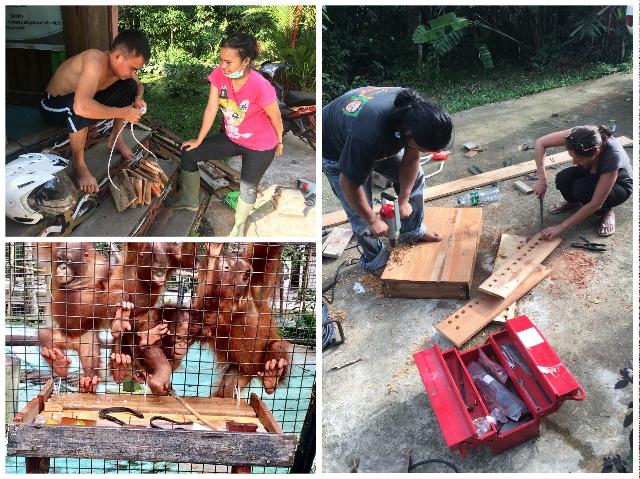 Orang-Oetans in Borneo 2 Verrijking | Rowena Goes Ape (4)
