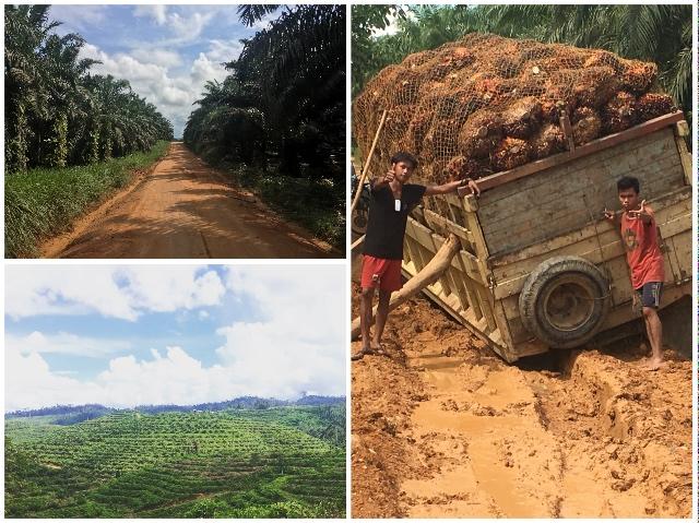Project Borneo Orang-Oetans Deel 3 - Palmolie | Rowena Goes Ape