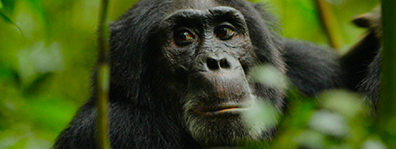 Rise of the Warrior Apes Blog Thumbnail 785x295 | Rowena Goes Ape