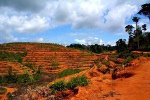Schrijf Mee Voor Behoud Regenwoud Blog | Rowena Goes Ape (1)