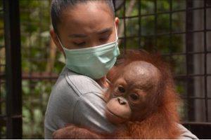 Schrijf Mee Voor Behoud Regenwoud Blog   Rowena Goes Ape (2)