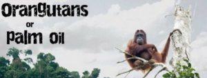 Schrijf Mee Voor Behoud Regenwoud Blog | Rowena Goes Ape