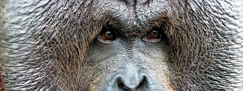 Orang-Oetans in Tasikoki worden groot Blog | Rowena Goes Ape