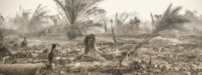 Zonder Regenwoud geen Orang-Oetan Blog | Rowena Goes Ape