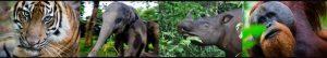The Guardians of Leuser Blog   Rowena Goes Ape 1