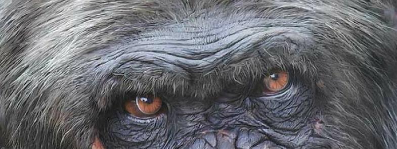 Frans de Waal in Zomergasten Blog | Rowena Goes Ape