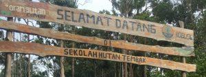 2e Oefenbos voor jonge orang-oetans Blog | Rowena Goes Ape