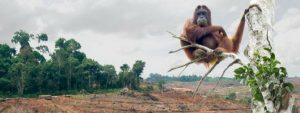 Palmolie in de Nederlandse Media Blog Thumbnail 785x295 | Rowena Goes Ape