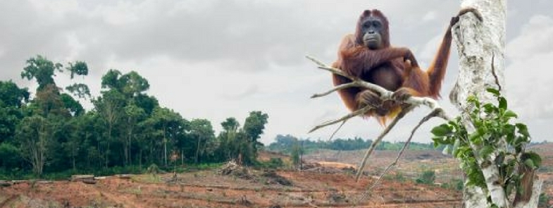 Palmolie in de Nederlandse Media Blog Thumbnail 785x295 | Rowena Goes Ape