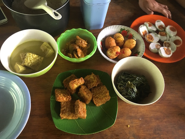Orang-Oetans medicijn uit planten   Rowena Goes Ape (1)