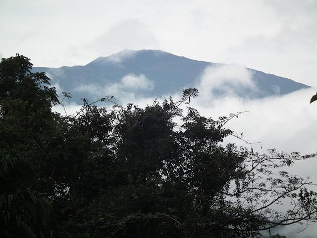 Limbe Wildlife Centre Blog | Rowena Goes Ape (3)