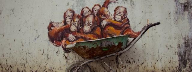 SOS Regenwoud Blog | Rowena Goes Ape (1)