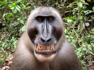 Bijzondere dieren De Dril Blog | Rowena Goes Ape (2)