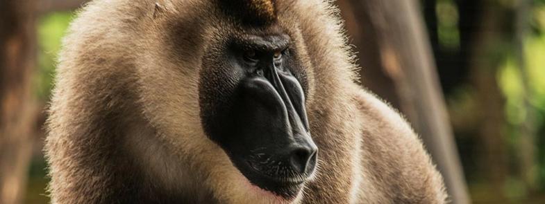 Bijzondere dieren De Dril Blog Thumbnail 785x295 | Rowena Goes Ape