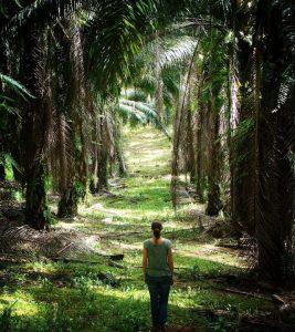 ABP Kap Ermee Blog   Rowena Goes Ape (3 Palmolieplantage Borneo)