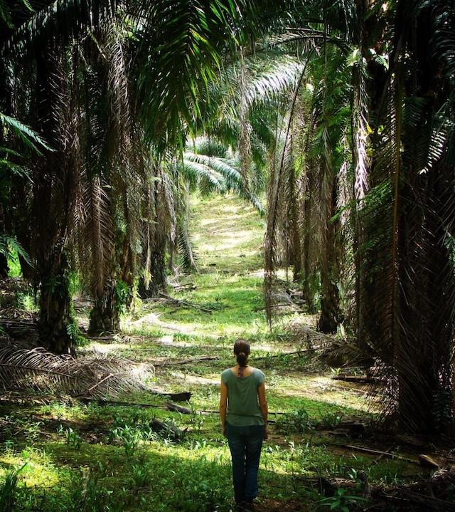 ABP Kap Ermee Blog | Rowena Goes Ape (3 Palmolieplantage Borneo)