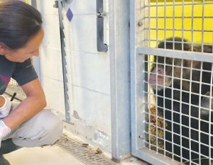 Animals Today Blog | Rowena Goes Ape (2)