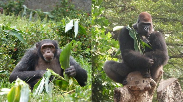 Animals Today Blog | Rowena Goes Ape (3-4)