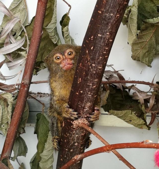 Exotische Zoogdieren AAP Blog | Rowena Goes Ape (1)