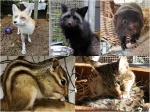 Exotische Zoogdiere AAP Blog   Rowena Goes Ape (2-6)