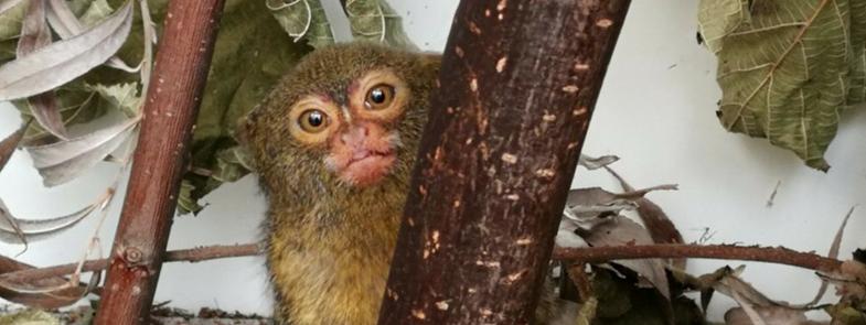 Exotische Zoogdiere AAP Blog Thumbnail 785x295   Rowena Goes Ape