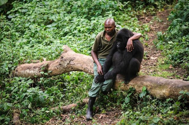 Virunga Blog | Rowena Goes Ape (1)