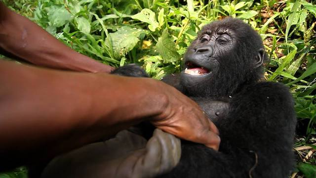 Virunga Blog | Rowena Goes Ape (3)