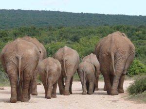 Rusthuis Olifanten Blog   Rowena Goes Ape (1)