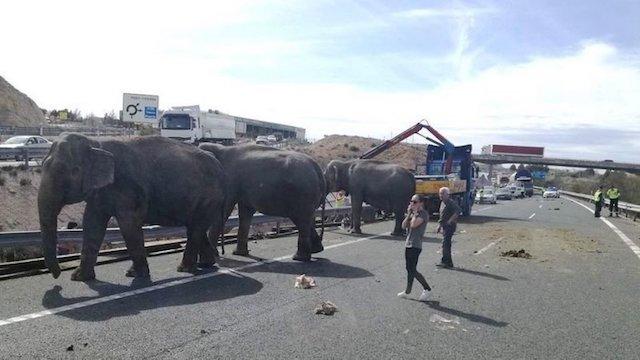 Rusthuis Olifanten Blog | Rowena Goes Ape (2)