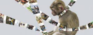 Selfies Deel Het Niet Blog Thumbnail 785x295 | Rowena Goes Ape (Foto: Stichting AAP)
