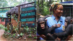Sierra Leone Blog | Rowena Goes Ape (3-4)