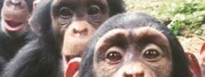 Tacugama Blog Thumbnail 785x295 | Rowena Goes Ape