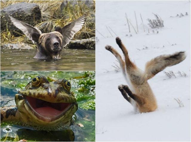 Lachen om Wilde Dieren Blog | Rowena Goes Ape (1-2-3)