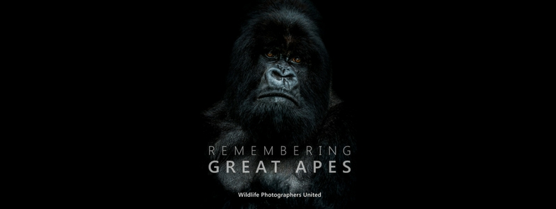 Remembering Great Apes Blog | Rowena Goes Ape (1)