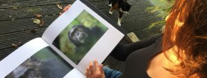 Remembering Great Apes Blog Thumbnail 785x295   Rowena Goes Ape