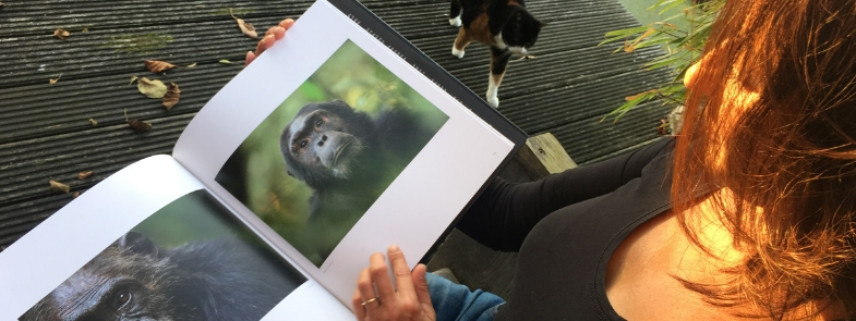 Remembering Great Apes Blog Thumbnail 785x295 | Rowena Goes Ape