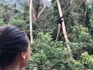 Chief Ouwe Dibbes Blog   Rowena Goes Ape (5)