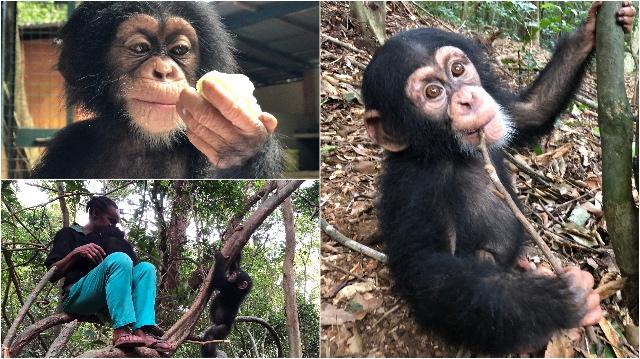 FIFO Blog | Rowena Goes Ape (2-3-4)