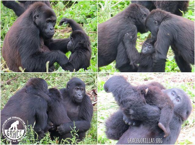 Grauer Gorilla Blog | Rowena Goes Ape (1)