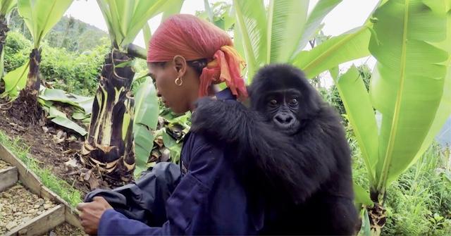 Grauer Gorilla Blog | Rowena Goes Ape (2)