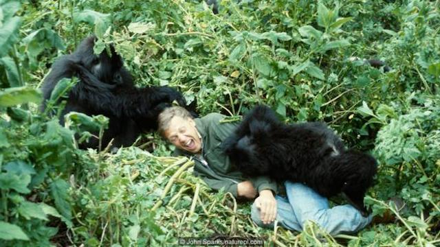 Berggorilla Blog | Rowena Goes Ape (2)