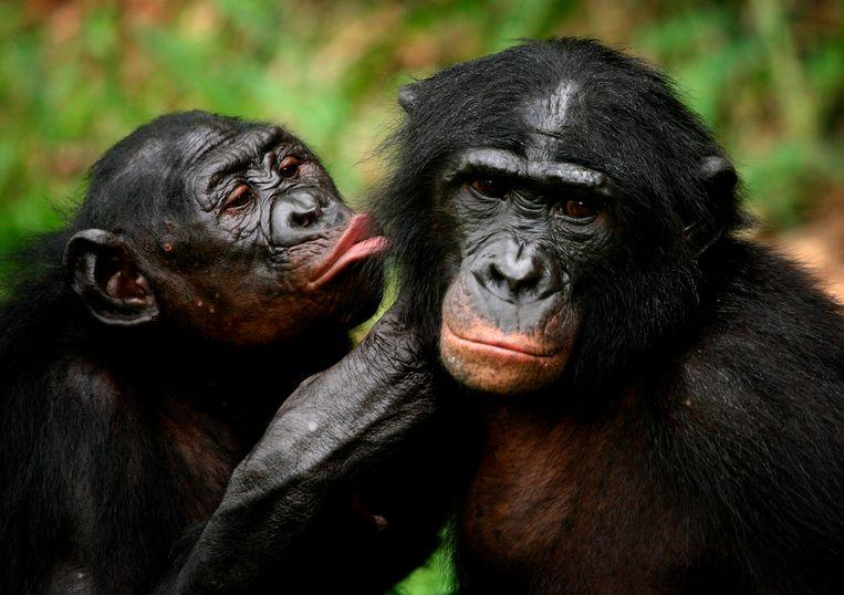 Bonobo Valentijnsdag Blog | Rowena Goes Ape (2)